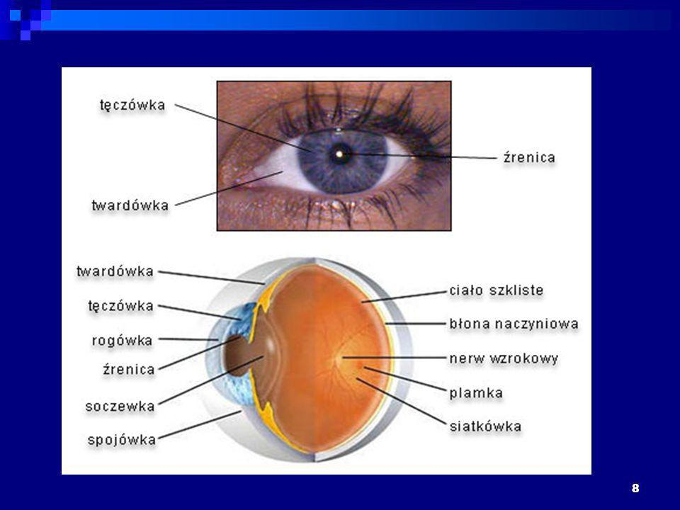 9 Obraz przedmiotu na siatkówce jest odwrócony do góry nogami , co wynika z fizycznej budowy oka (soczewka odwraca obraz).