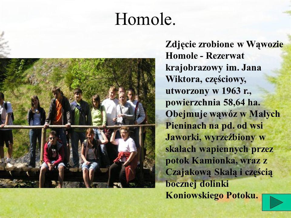 Homole. Zdjęcie zrobione w Wąwozie Homole - Rezerwat krajobrazowy im.