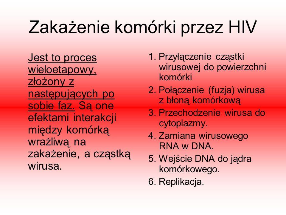 Zakażenie komórki przez HIV Jest to proces wieloetapowy, złożony z następujących po sobie faz. Są one efektami interakcji między komórką wrażliwą na z