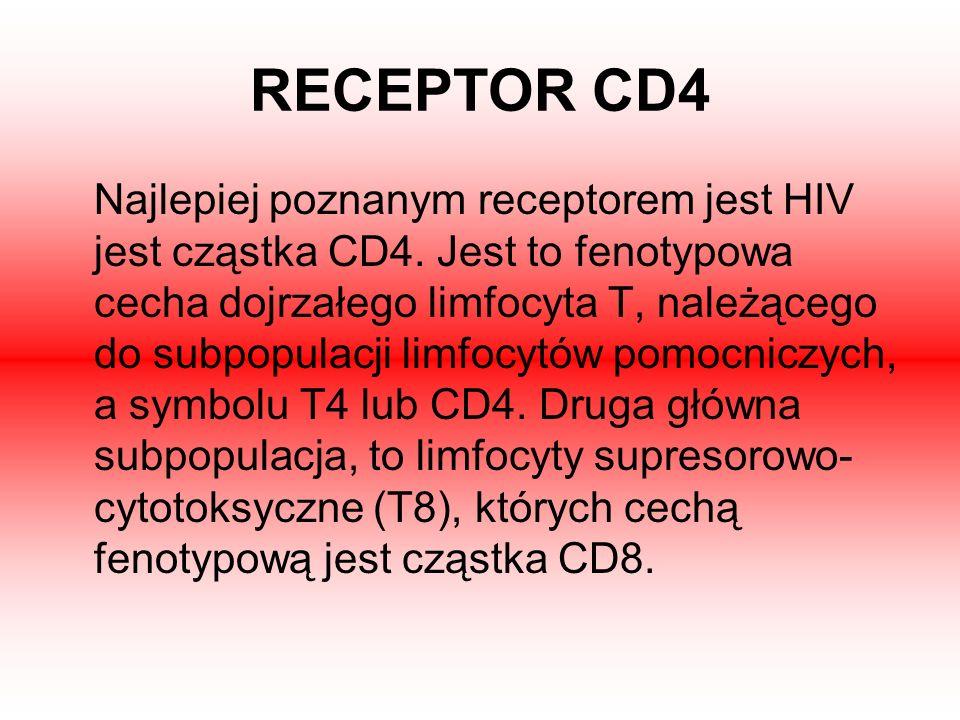 RECEPTOR CD4 Najlepiej poznanym receptorem jest HIV jest cząstka CD4. Jest to fenotypowa cecha dojrzałego limfocyta T, należącego do subpopulacji limf