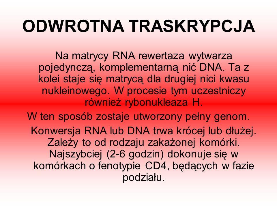 ODWROTNA TRASKRYPCJA Na matrycy RNA rewertaza wytwarza pojedynczą, komplementarną nić DNA. Ta z kolei staje się matrycą dla drugiej nici kwasu nuklein