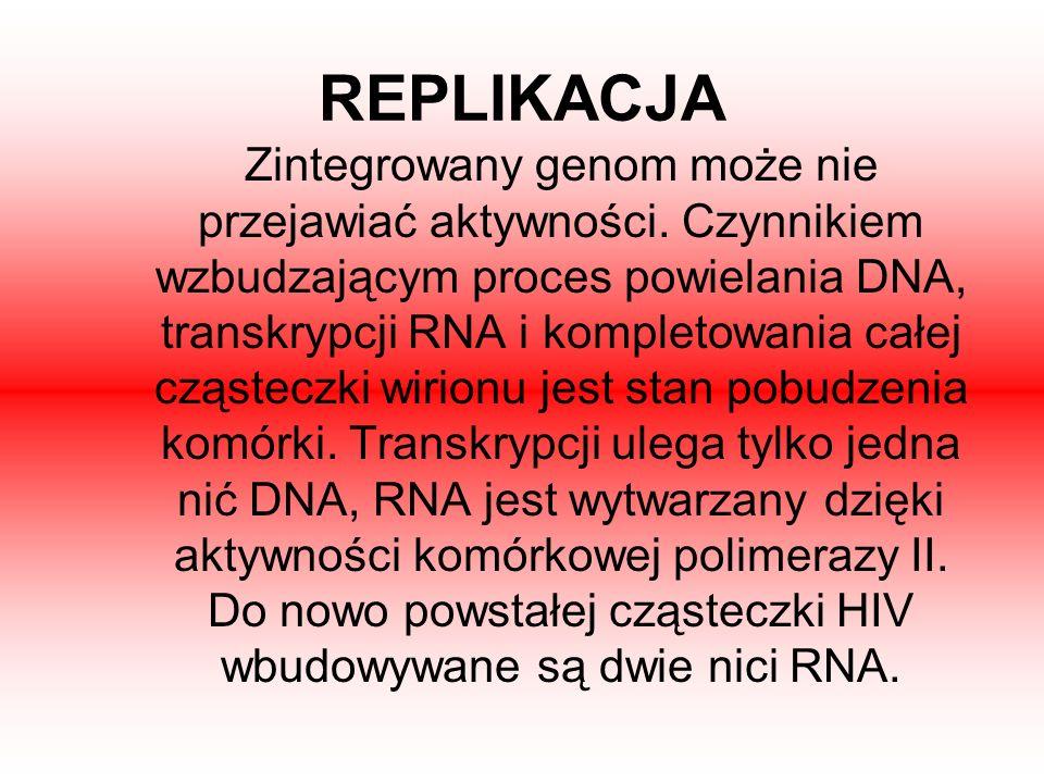 REPLIKACJA Zintegrowany genom może nie przejawiać aktywności. Czynnikiem wzbudzającym proces powielania DNA, transkrypcji RNA i kompletowania całej cz
