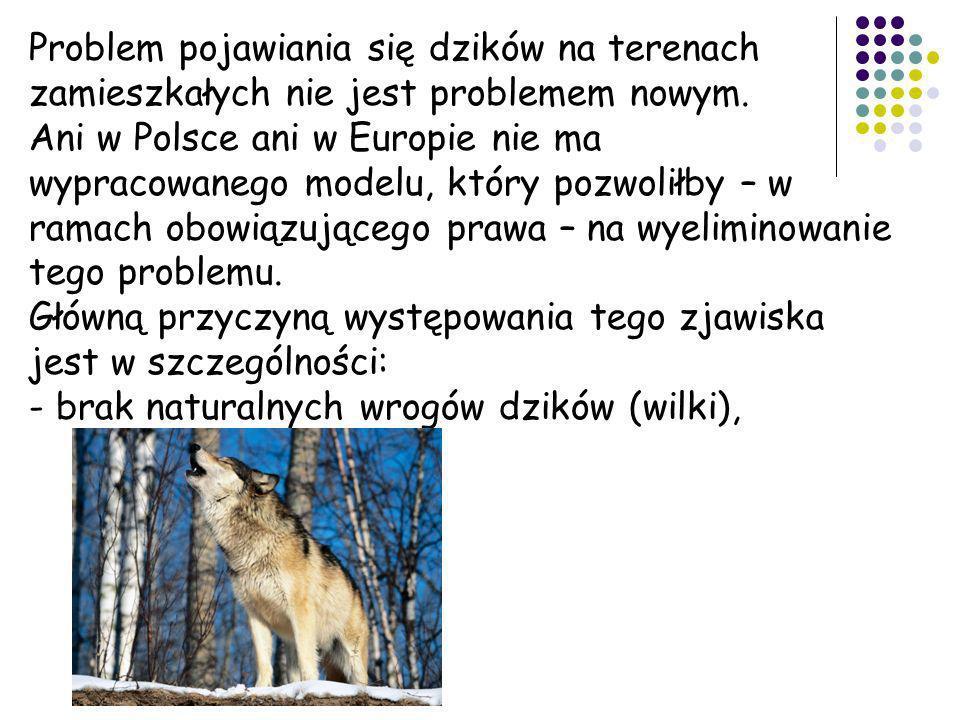 Problem pojawiania się dzików na terenach zamieszkałych nie jest problemem nowym. Ani w Polsce ani w Europie nie ma wypracowanego modelu, który pozwol