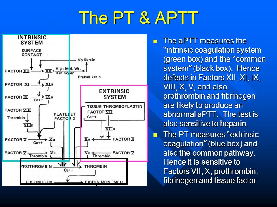 The PT & APTT The aPTT measures the intrinsic coagulation system (green box) and the common system (black box). Hence defects in Factors XII, XI, IX,