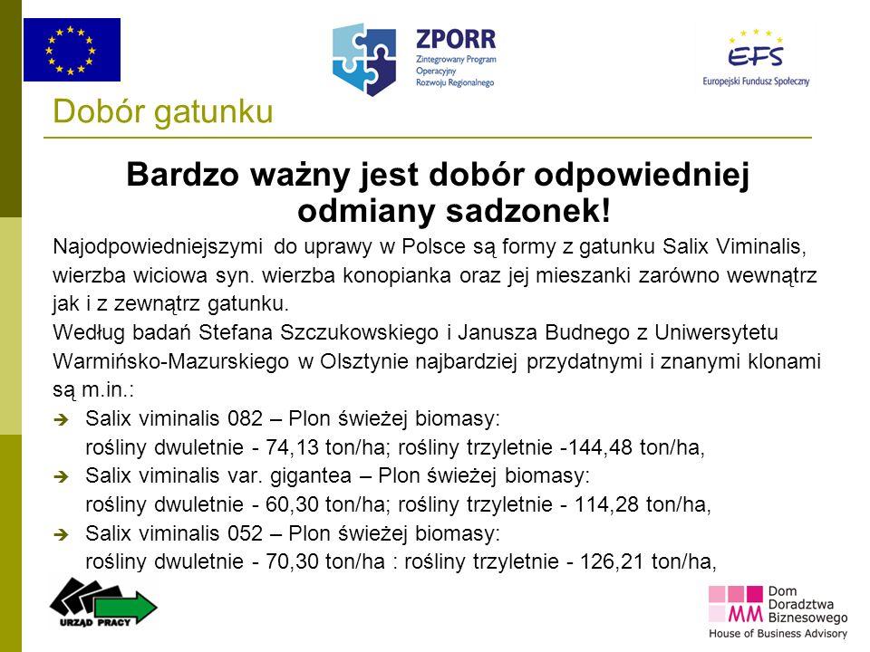 23 Dobór gatunku Bardzo ważny jest dobór odpowiedniej odmiany sadzonek! Najodpowiedniejszymi do uprawy w Polsce są formy z gatunku Salix Viminalis, wi