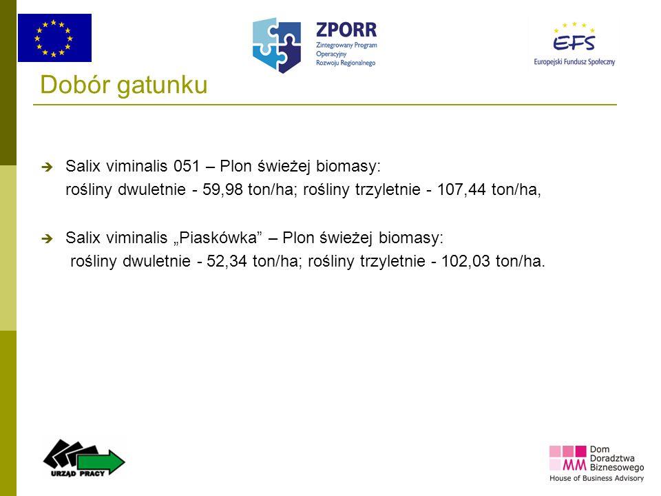 24 Dobór gatunku Salix viminalis 051 – Plon świeżej biomasy: rośliny dwuletnie - 59,98 ton/ha; rośliny trzyletnie - 107,44 ton/ha, Salix viminalis Pia