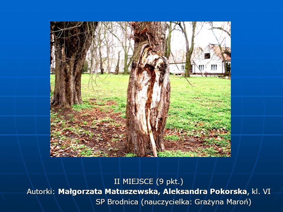 II MIEJSCE (9 pkt.) Autorki: Małgorzata Matuszewska, Aleksandra Pokorska, kl. VI SP Brodnica (nauczycielka: Grażyna Maroń) SP Brodnica (nauczycielka: