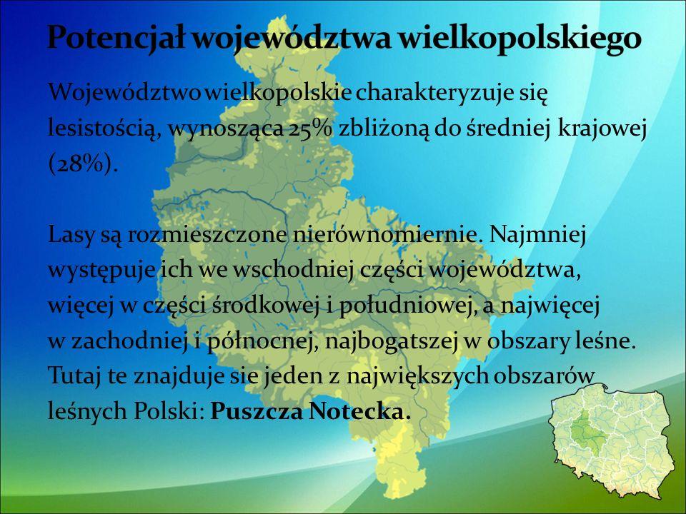 Województwo wielkopolskie charakteryzuje się lesistością, wynosząca 25% zbliżoną do średniej krajowej (28%).