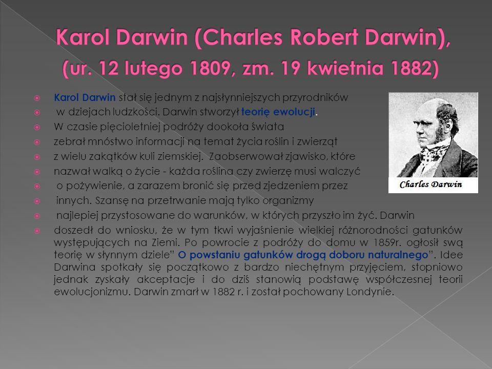Karol Darwin stał się jednym z najsłynniejszych przyrodników w dziejach ludzkości. Darwin stworzył teorię ewolucji. W czasie pięcioletniej podróży doo