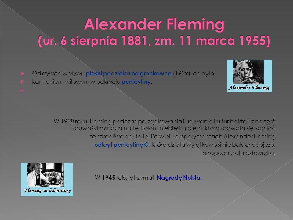 Odkrywca wpływu pleśni pędzlaka na gronkowce (1929), co było kamieniem milowym w odkryciu penicyliny. W 1928 roku, Fleming podczas porządkowania i usu