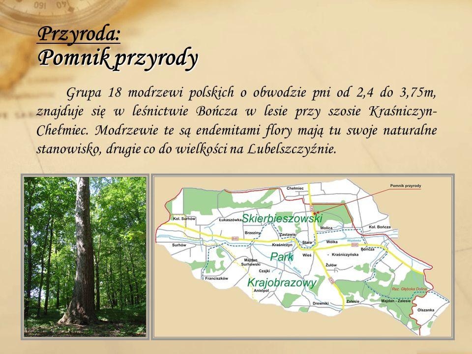Pomnik przyrody Przyroda: Pomnik przyrody Grupa 18 modrzewi polskich o obwodzie pni od 2,4 do 3,75m, znajduje się w leśnictwie Bończa w lesie przy szo