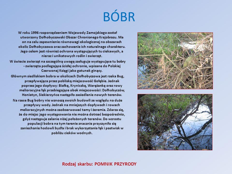 BÓBR W roku 1996 rozporządzeniem Wojewody Zamojskiego został utworzony Dołhobyczowski Obszar Chronionego Krajobrazu. Ma on na celu zapewnienie równowa