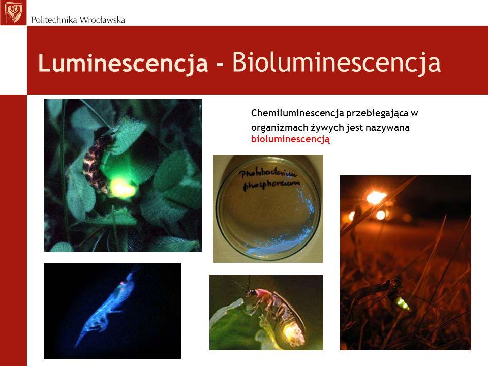Luminescencja - Bioluminescencja Chemiluminescencja przebiegająca w organizmach żywych jest nazywana bioluminescencją