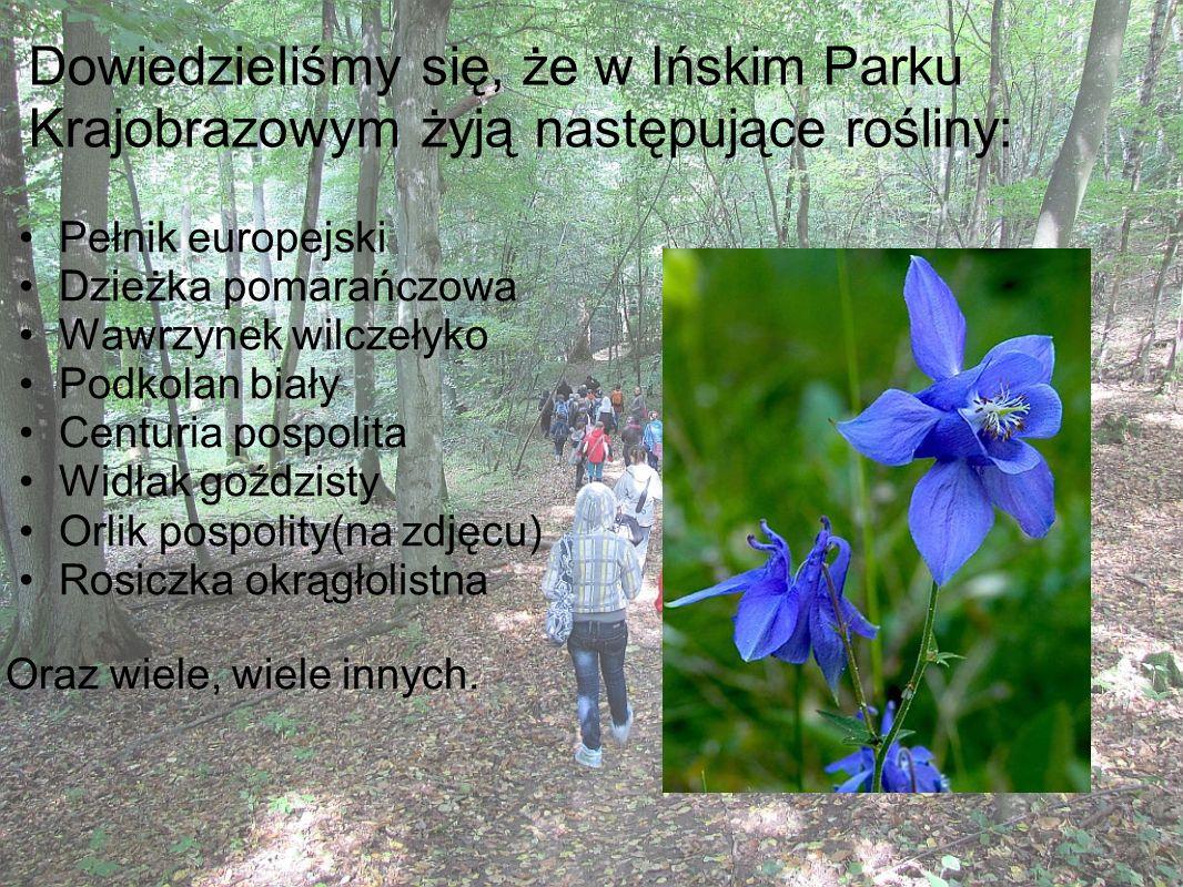 Dowiedzieliśmy się, że w Ińskim Parku Krajobrazowym żyją następujące rośliny: Pełnik europejski Dzieżka pomarańczowa Wawrzynek wilczełyko Podkolan bia