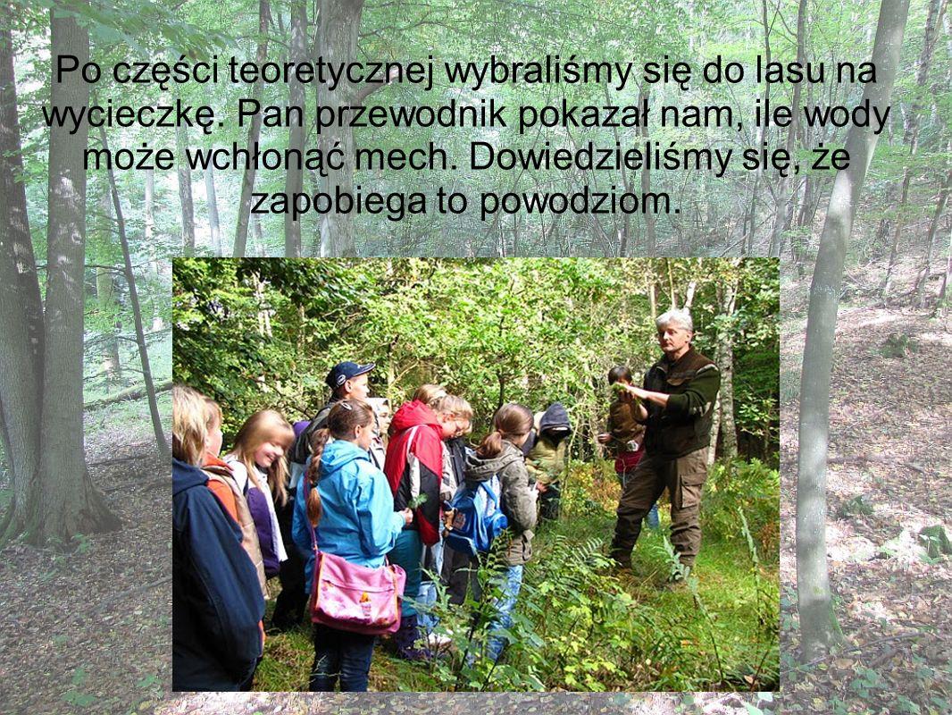 Po części teoretycznej wybraliśmy się do lasu na wycieczkę. Pan przewodnik pokazał nam, ile wody może wchłonąć mech. Dowiedzieliśmy się, że zapobiega