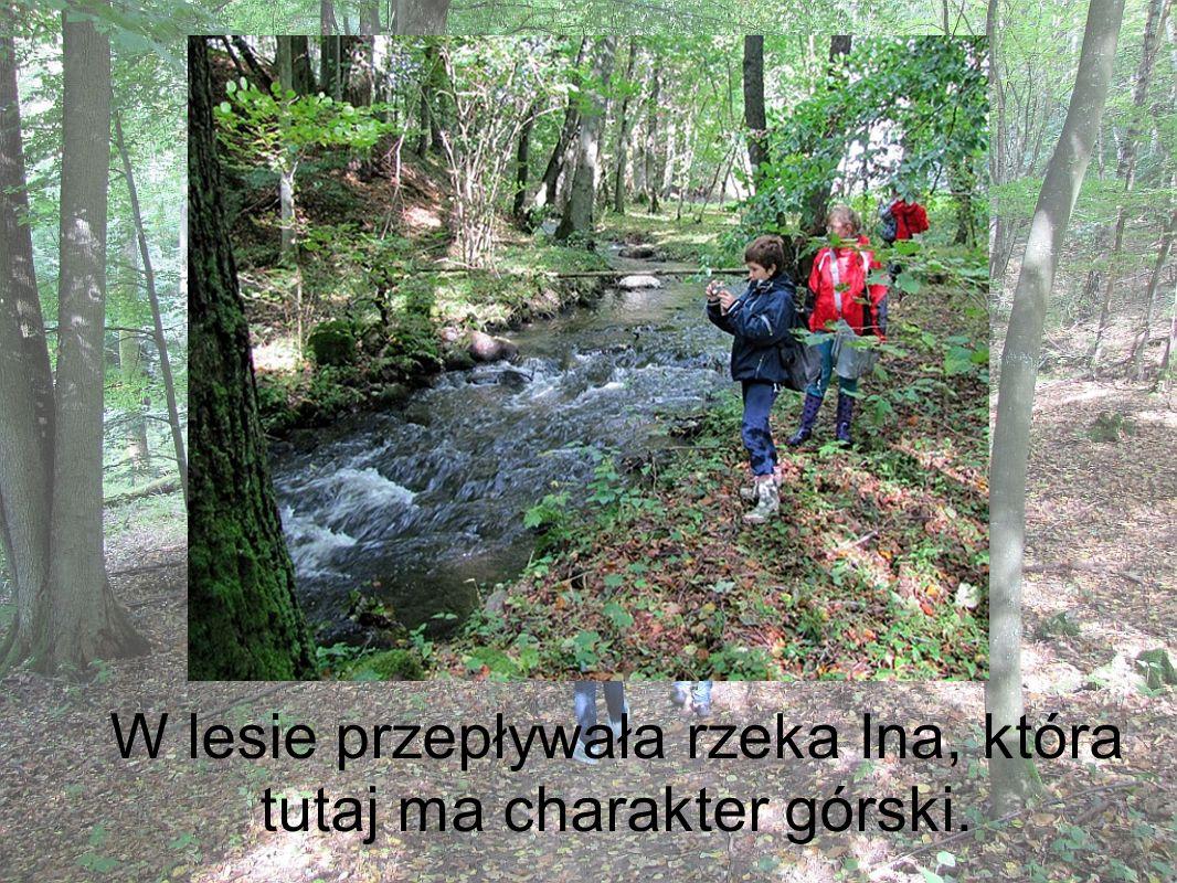 W lesie przepływała rzeka Ina, która tutaj ma charakter górski.