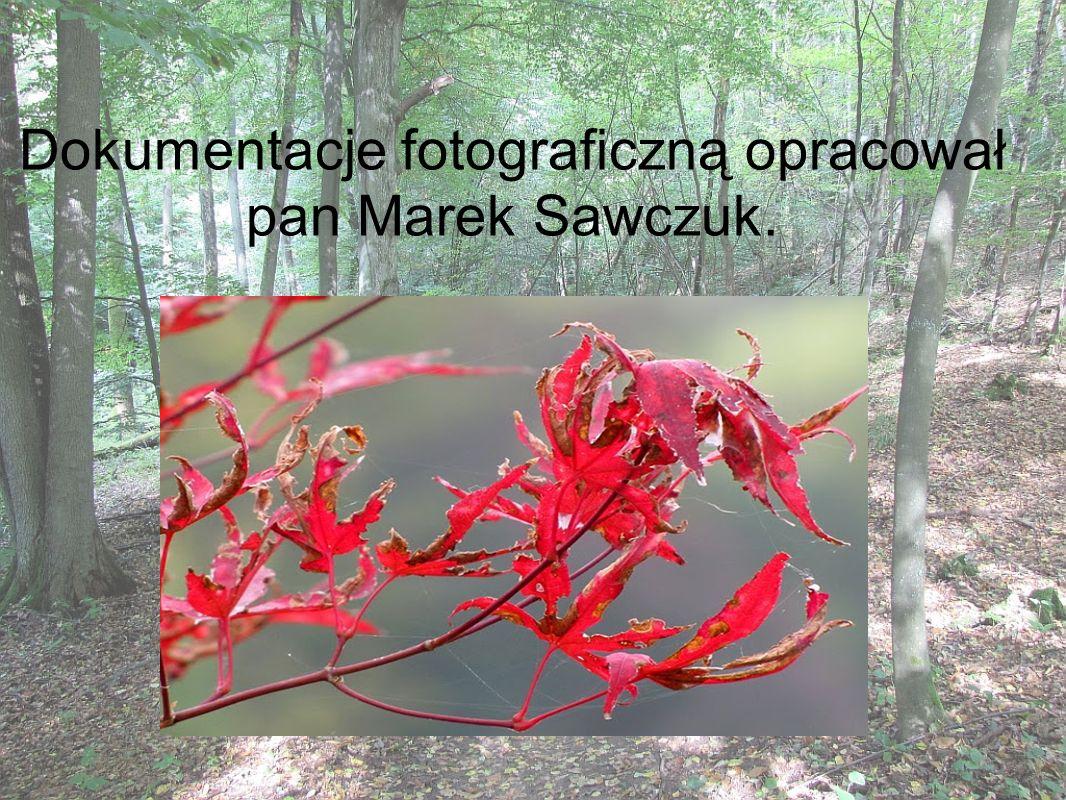 Dokumentacje fotograficzną opracował pan Marek Sawczuk.