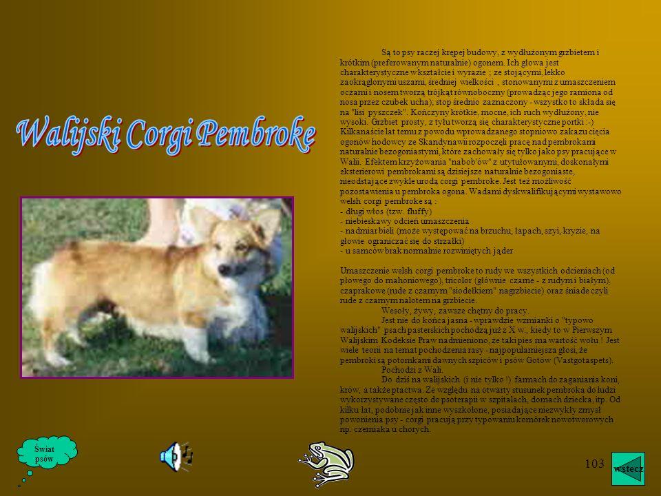 102 Świat psów wstecz
