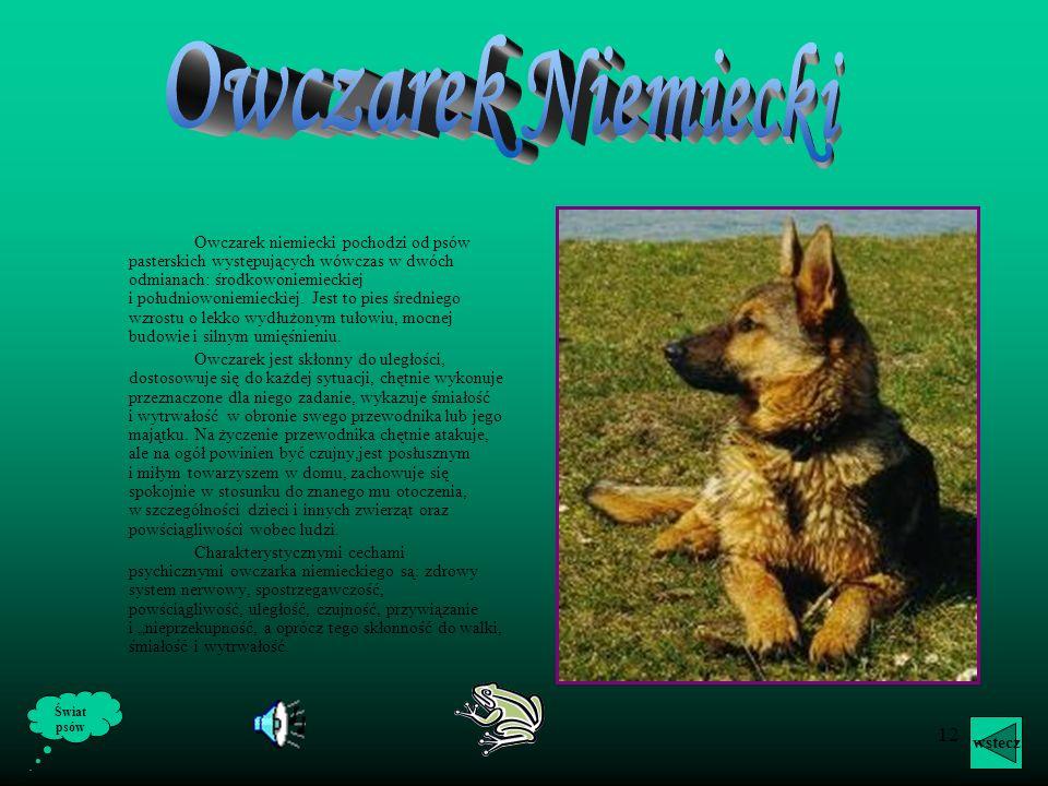 11 O Owczarkach Pasterskimi nazywamy psy użytkowe do pilnowania i pędzenia stad zwierząt (bydła, owiec). Wszystkie one są spokrewnione z psami bojowym