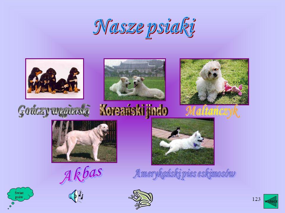 122 wstecz Świat psów