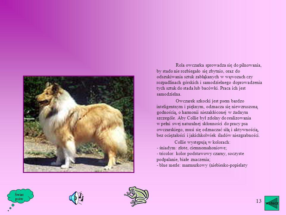12 Owczarek niemiecki pochodzi od psów pasterskich występujących wówczas w dwóch odmianach: środkowoniemieckiej i południowoniemieckiej. Jest to pies