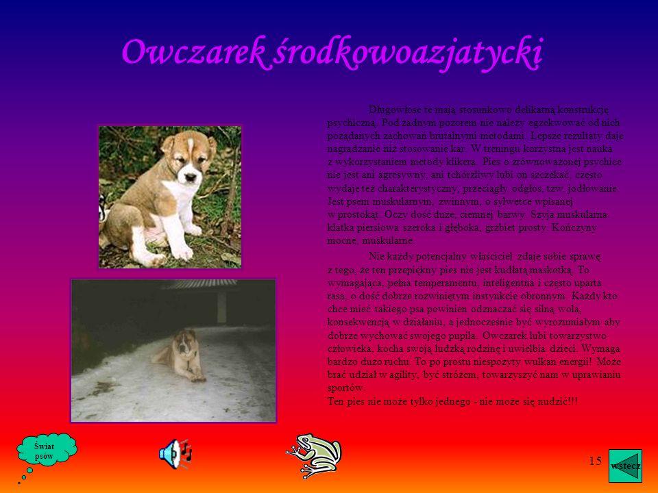 14 Pies tej rasy jest mały, ma około 40 cm. wzrostu,jest długowłosy, o sympatycznym wyglądzie. Odznacza się przywiązaniem do pana i nieufnością do obc