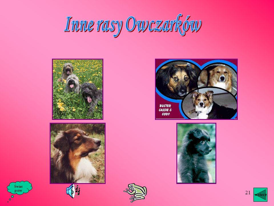 20 wstecz Świat psów