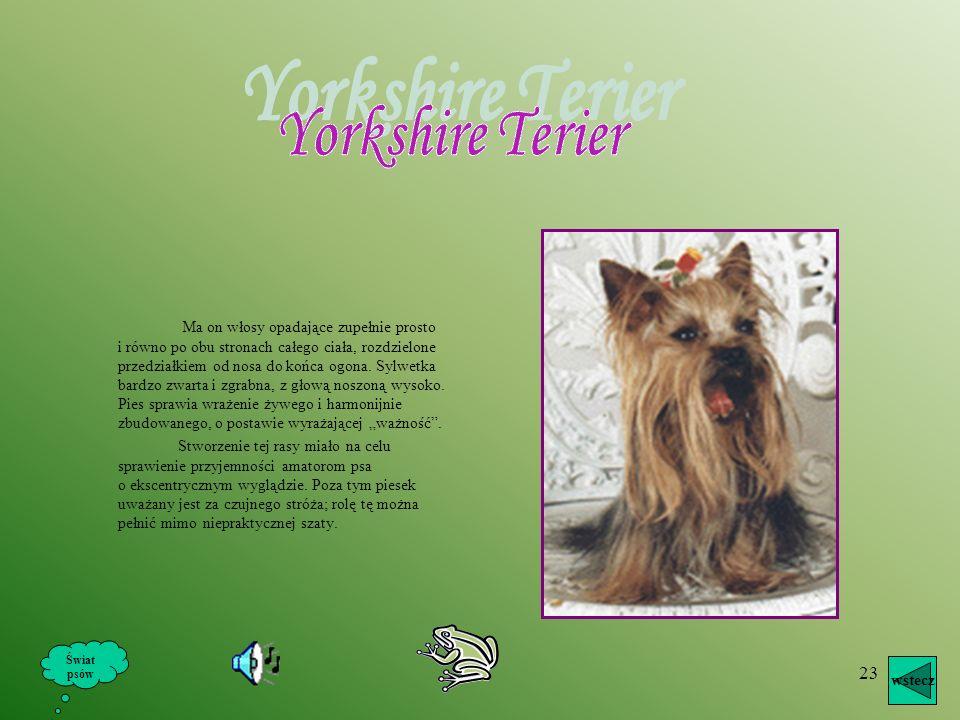 22 Nazwa terier – pies ziemny, czyli norowiec – wskazuje na jego użytkowanie. Do łowiectwa i sportu kynologicznego weszły one niejako ubocznie, towarz