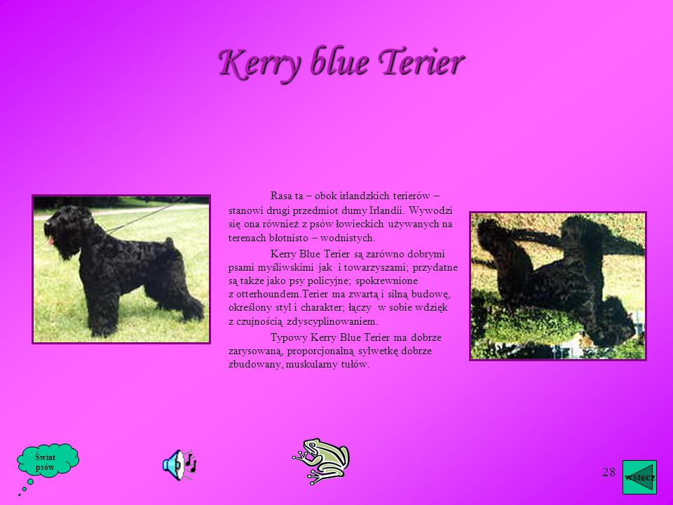 27 Początkowo pies ten zyskał sobie popularność w niewielkim gronie osób, które szukały dobrego towarzysza, a zarazem ciętego obrońcy. Z roku na rok w