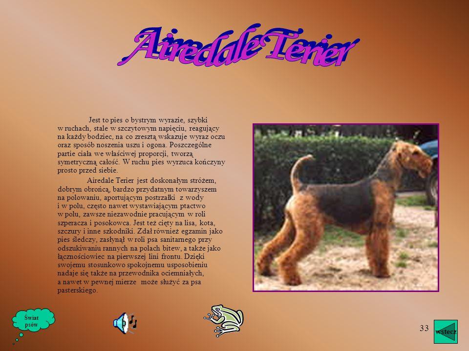 32 Znany w całej Europie, jest bliskim kuzynem West Highland White Terier. Rasa ta przechodzi również wiele przeobrażeń, nim w roku 1930 ustalono jej