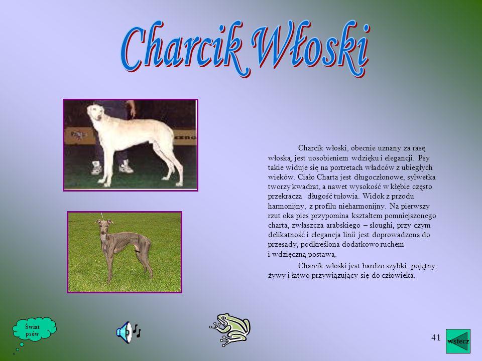 40 Pochodzenie ich nie jest właściwie jasne, lecz wiadomo, że psy tego typu już w starożytnym Egipcie występowały i przetrwały do dnia dzisiejszego w