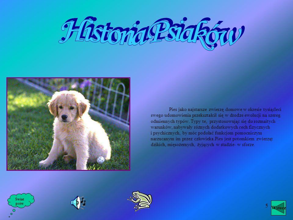 4 Świat psów Wstecz