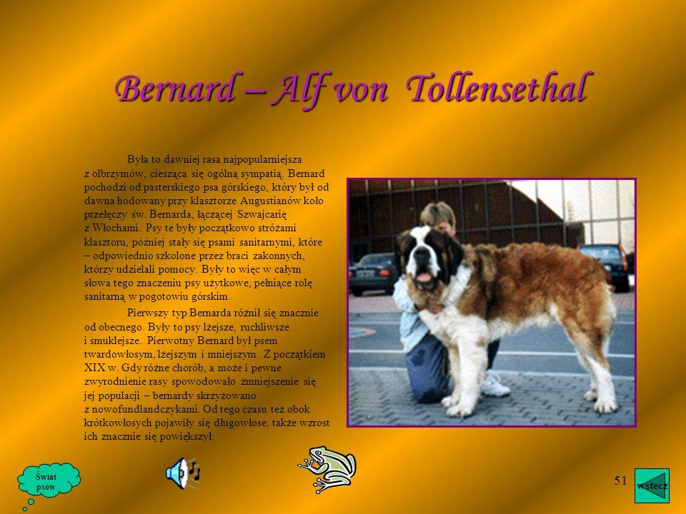 50 Czasem zwany jest ulmskim, a na zachodzie Europy i w krajach anglosaskich również wielkim duńczykiem. W średniowieczu Dogi były używane jako psy go