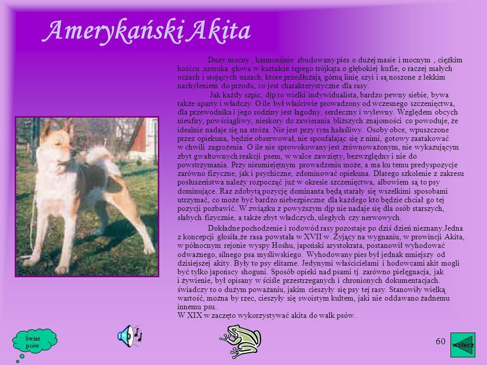 59 Pies dużego wzrostu, dobrze wyważony i mocny. Drugorzędne cechy płciowe silnie zaznaczone, połączone z dużą szlachetnością i godnością. Mocna konst