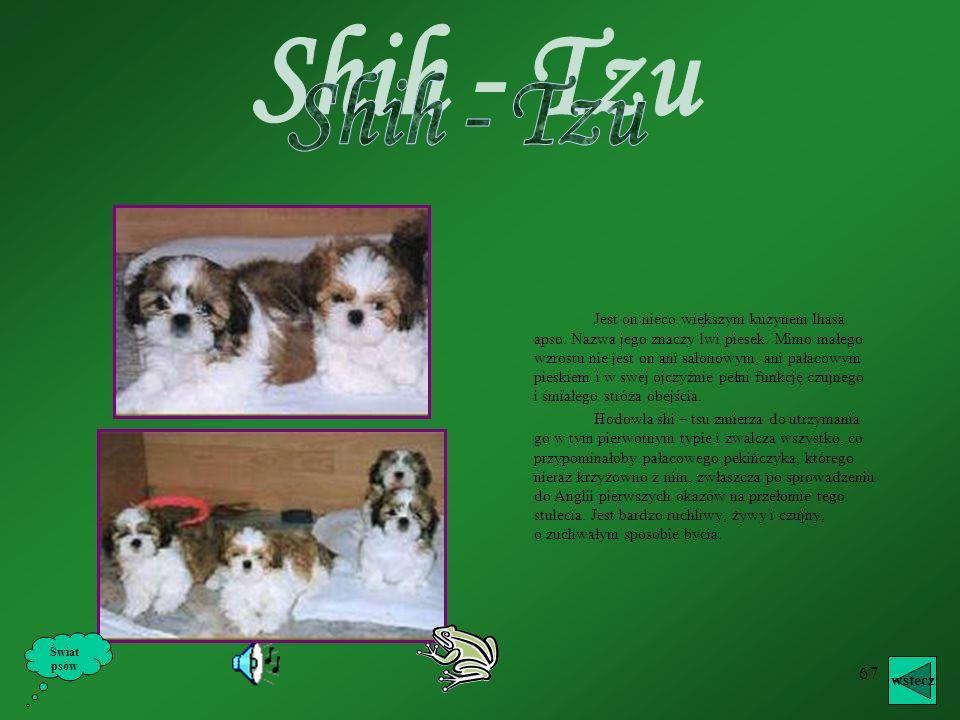66 Siberian Husky ( Husky Syberyjski ) wstecz Świat psów