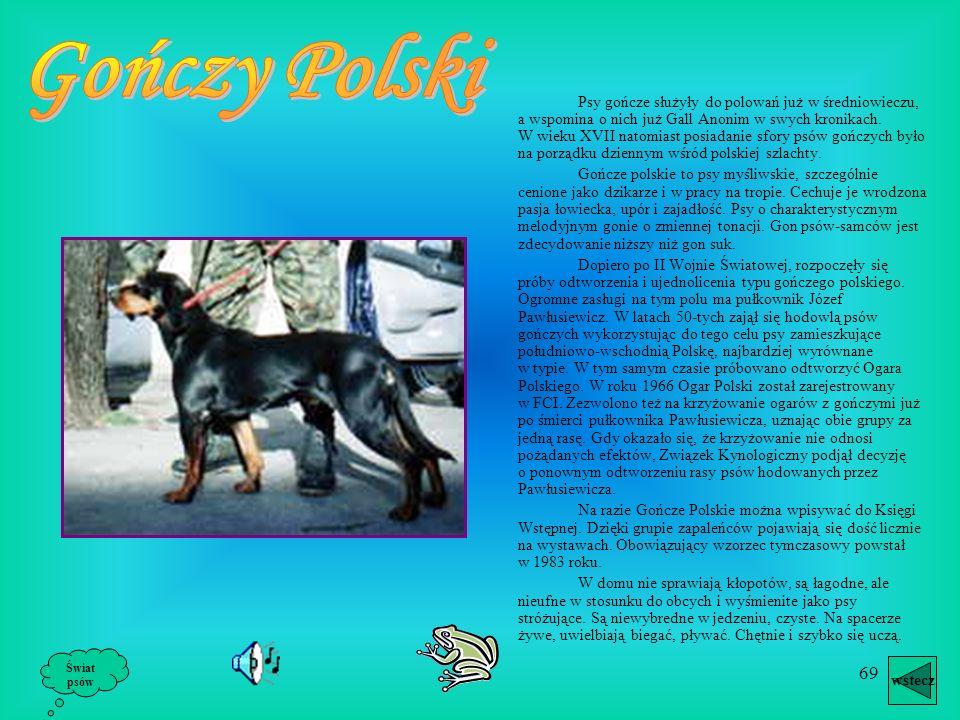 68 wstecz Świat psów