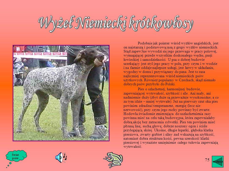 74 Rasa ta powstała przypuszczalnie ze skrzyżowania psów gończych z płochaczem. Popularny był raczej jako pies leśników, poza tym używany do pracy wod