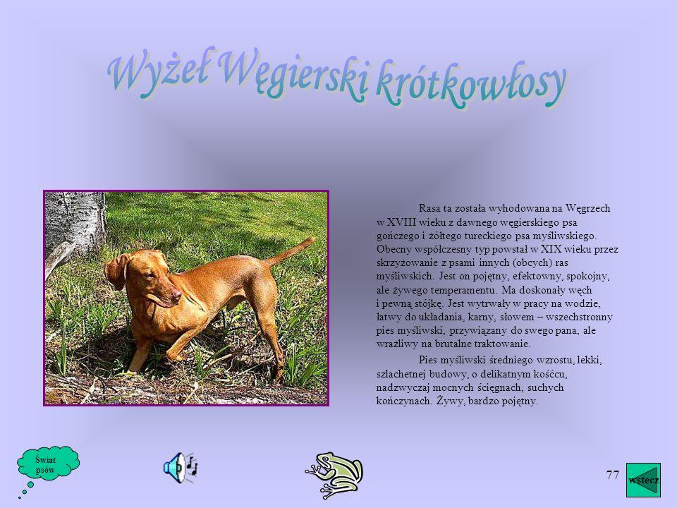 76 Inne rasy psiaków wstecz Świat psów