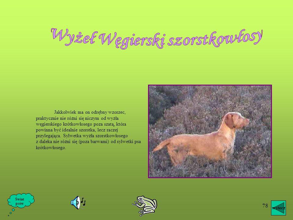 77 Rasa ta została wyhodowana na Węgrzech w XVIII wieku z dawnego węgierskiego psa gończego i żółtego tureckiego psa myśliwskiego. Obecny współczesny