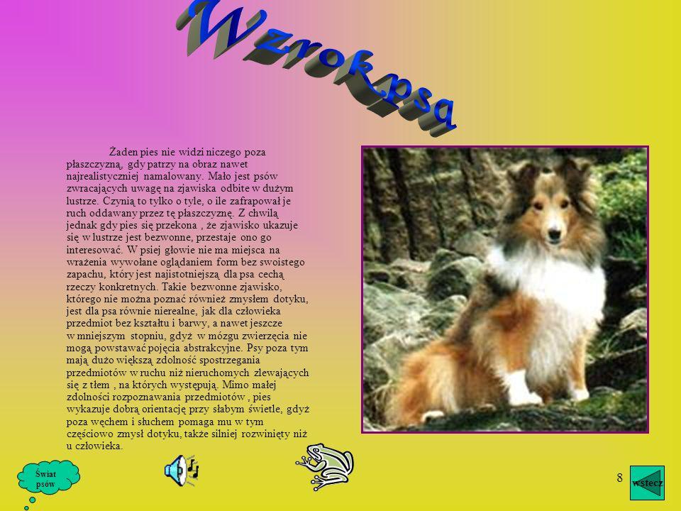 7 Słuch jest u psów nad wyraz rozwinięty, znacznie czulszy niż u człowieka. Skala zasięgu słuchu psa wybiega dalej niż zasięg słuchu ludzkiego. Ucho p