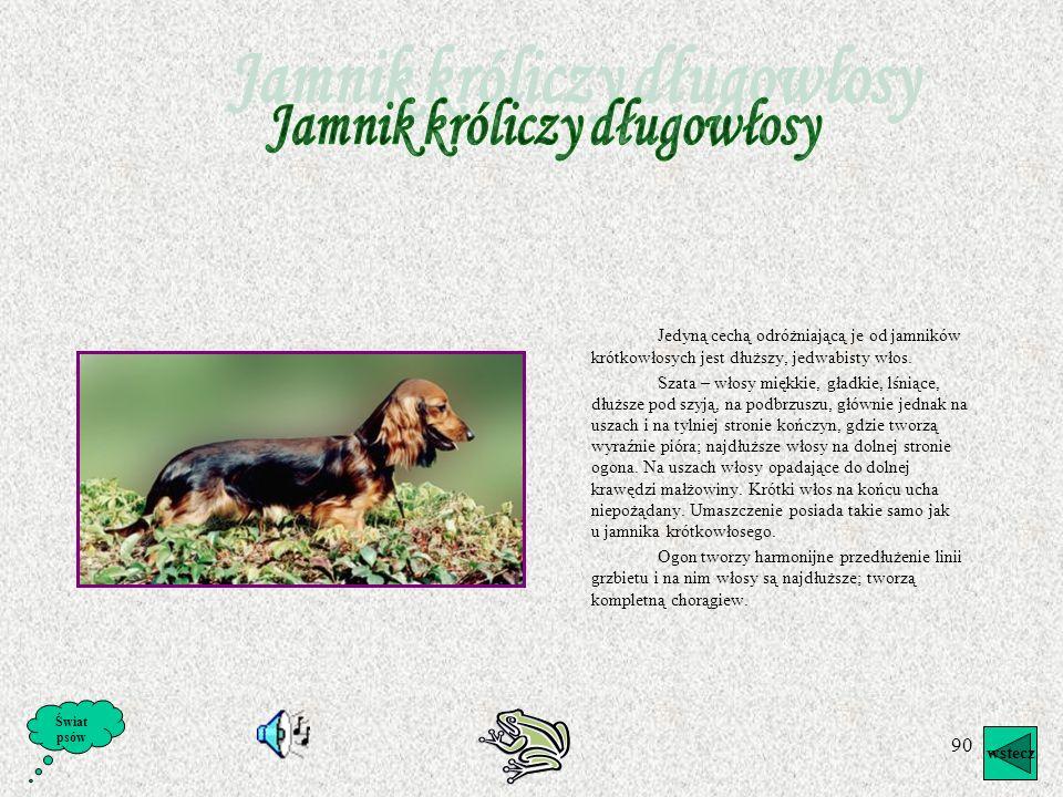 89 Wstęp o Jamnikach Jamniki zdobyły ogromną popularność na całym świecie, szczególnie zaś w Szwecji, gdzie licznie występują. Pod względem usposobien