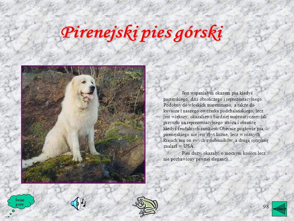 97 Pies św. Huberta Pies św. Huberta jest najtypowszym przedstawicielem opisywanej tu grupy. Jest to rasa stara, pochodząca przypuszczalnie od średnio