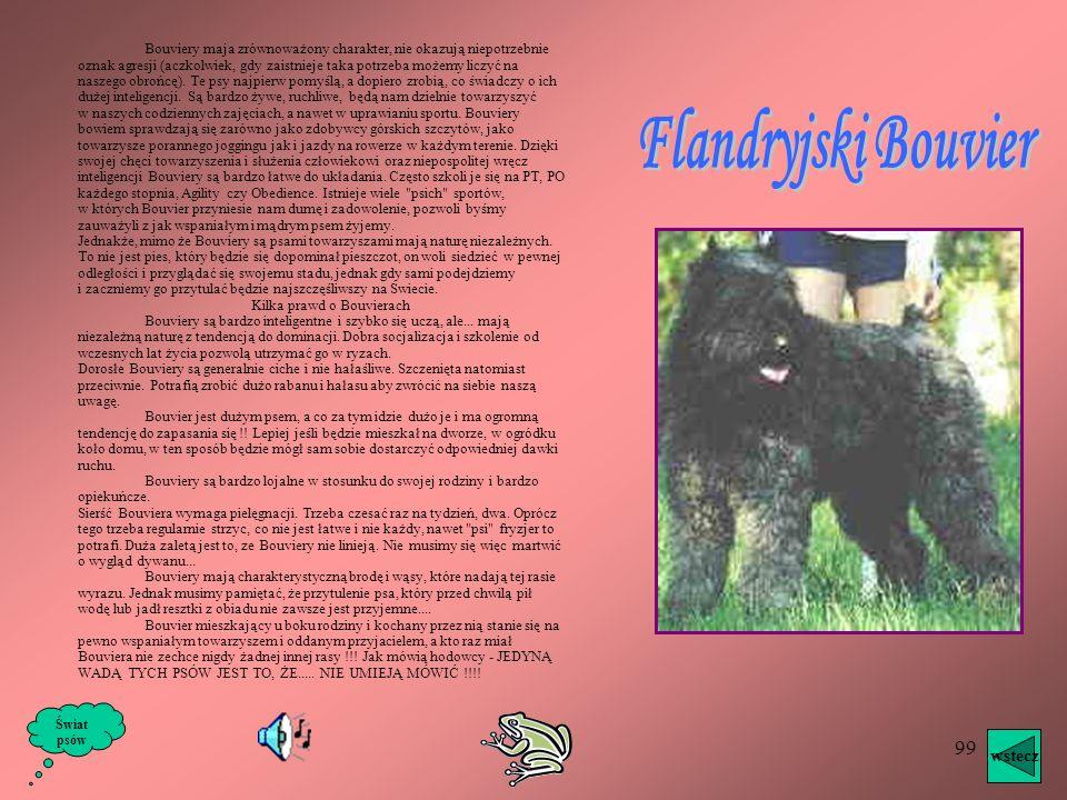 98 Jest wspaniałym okazem psa kiedyś pasterskiego, dziś obrończego i reprezentacyjnego. Podobny do włoskich maremmano, a także do kuvasza i naszego ow