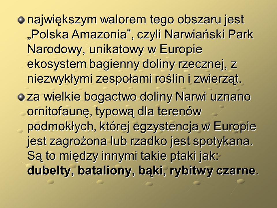 duża część gminy znajduje się w NPN Polska Amazonia – Dolina NarwiRybitwa czarna Żeremie bobrowe