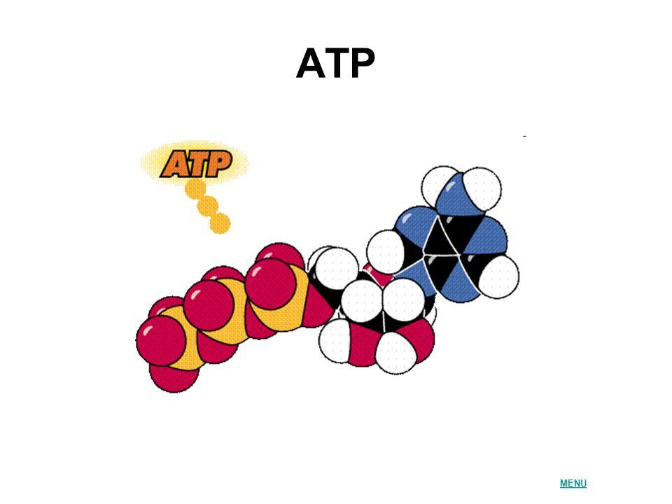 ATP MENU