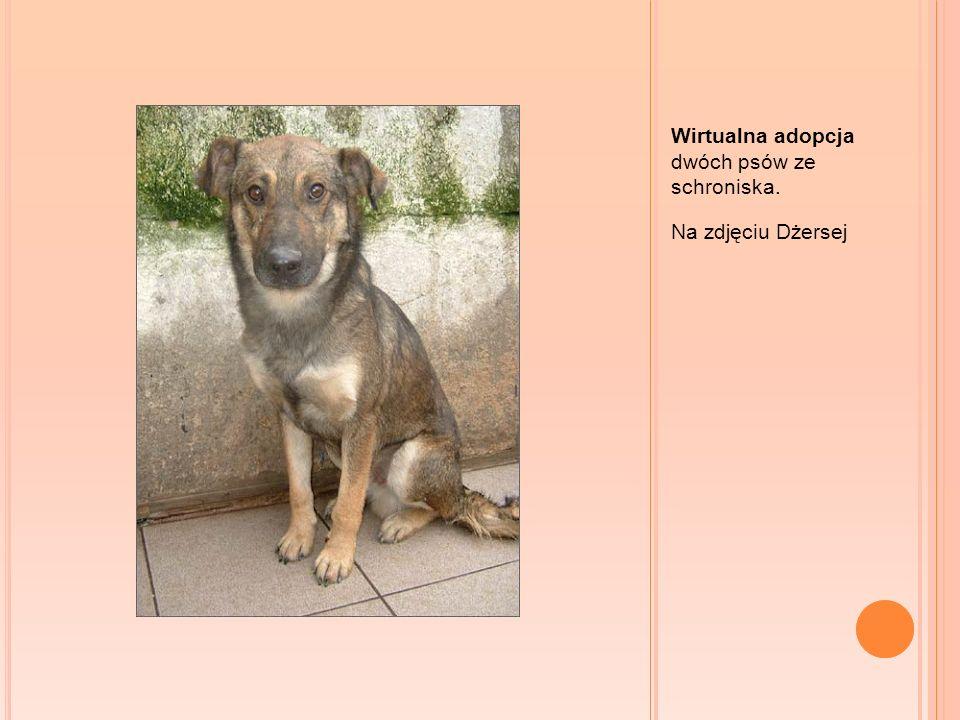 Wirtualna adopcja dwóch psów ze schroniska. Na zdjęciu Dżersej