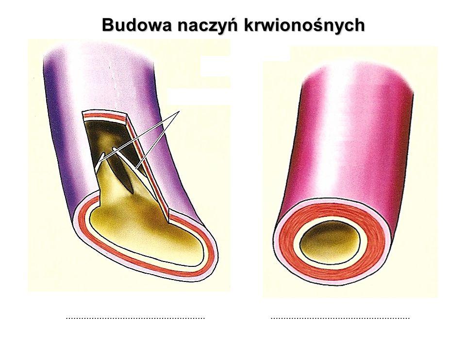 Budowa naczyń krwionośnych ……………………………………………… ………………………………………………