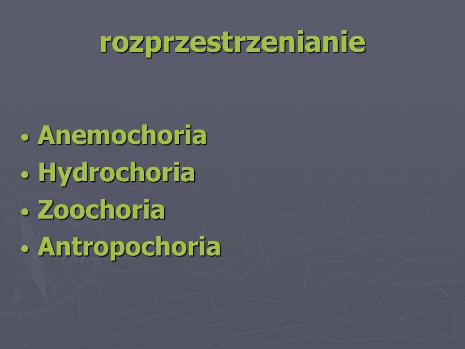 rozprzestrzenianie Anemochoria Anemochoria Hydrochoria Hydrochoria Zoochoria Zoochoria Antropochoria Antropochoria