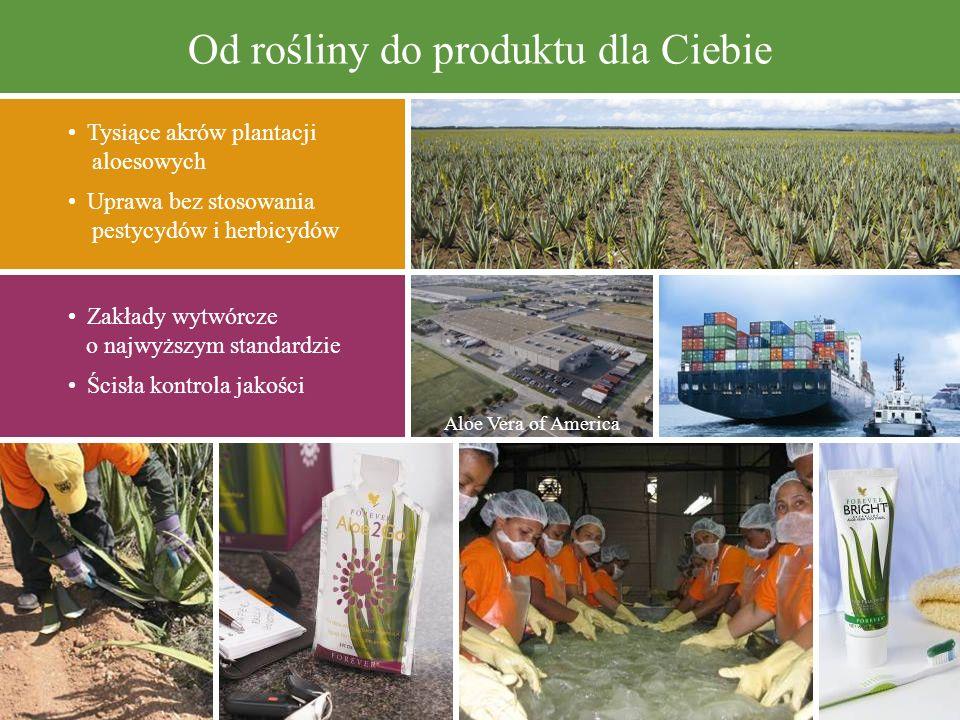 Od rośliny do produktu dla Ciebie Tysiące akrów plantacji aloesowych Uprawa bez stosowania pestycydów i herbicydów Zakłady wytwórcze o najwyższym stan