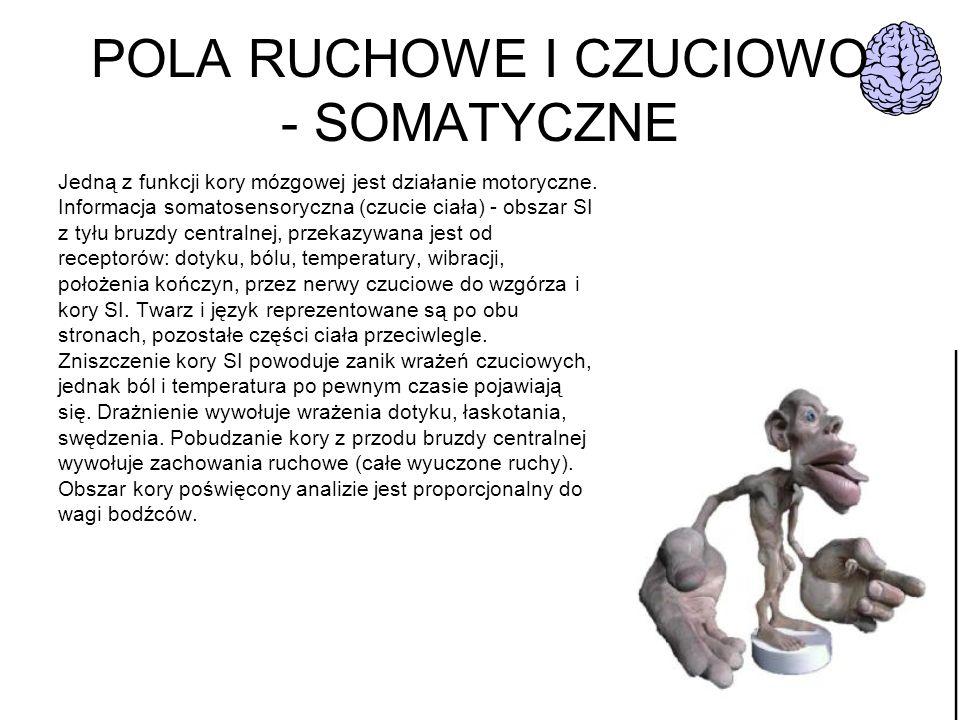 POLA RUCHOWE I CZUCIOWO - SOMATYCZNE Jedną z funkcji kory mózgowej jest działanie motoryczne. Informacja somatosensoryczna (czucie ciała) - obszar SI